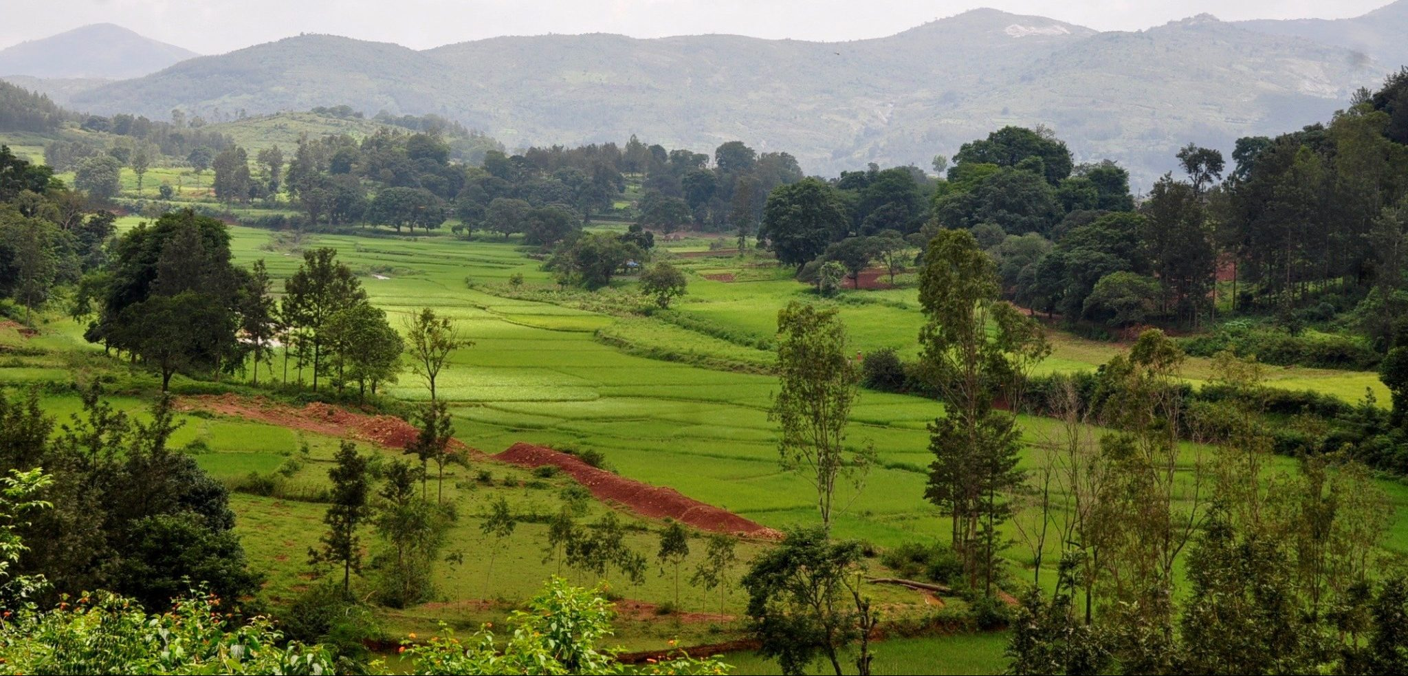 The Landscape Approach of The Livelihoods Araku #2 Project In India