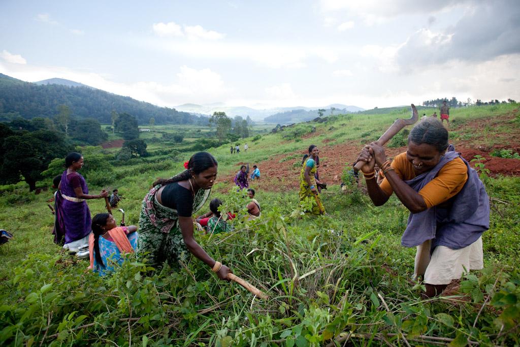 Interview : la recette de l'ONG Naandi pour mobiliser des milliers d'agriculteurs en Inde