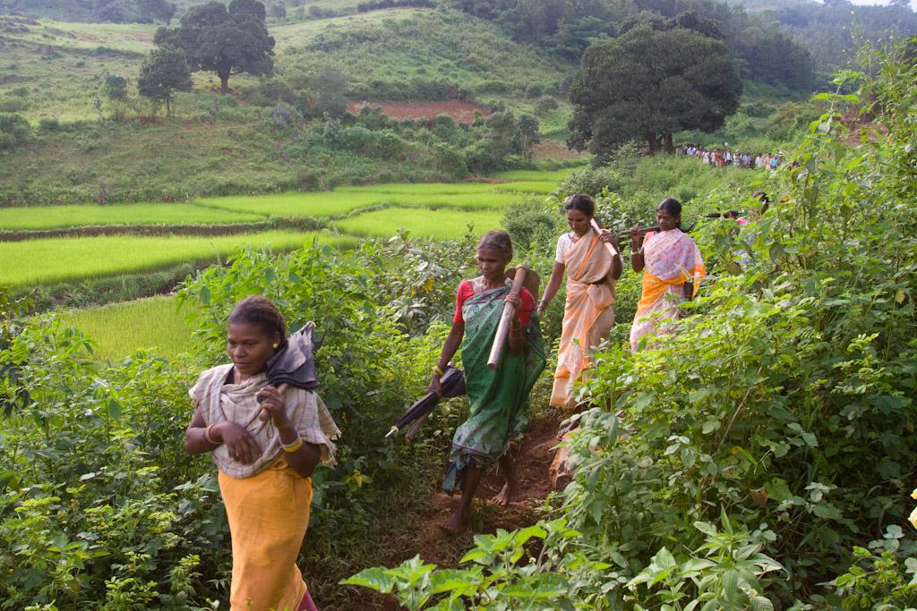 Les fruits de l'espoir – Le projet Livelihoods – Araku #2 en Inde