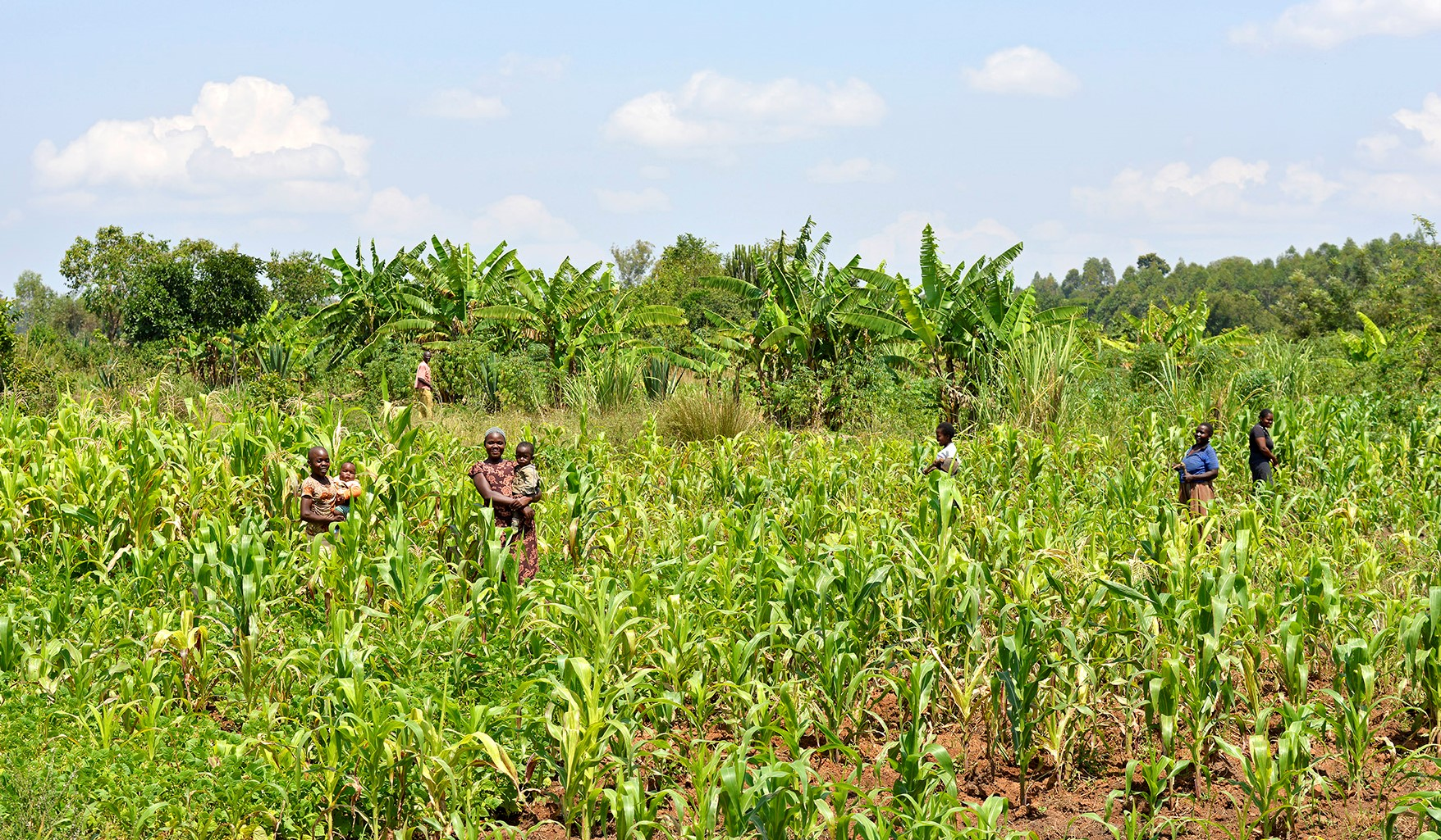 """Interview with Wangu Mutua, Kenya: <br> """"FARMERS INVOLVED IN THE LIVELIHOODS PROJECT CAN NOW ASPIRE TO A BETTER FUTURE"""""""""""