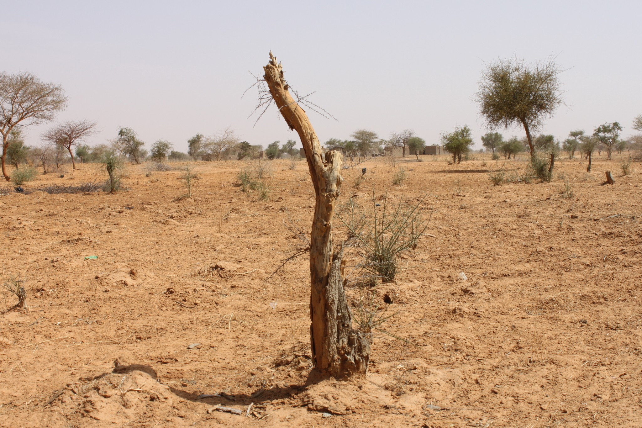 Burkina Faso: a public-private partnership to fight desertification and land degradation