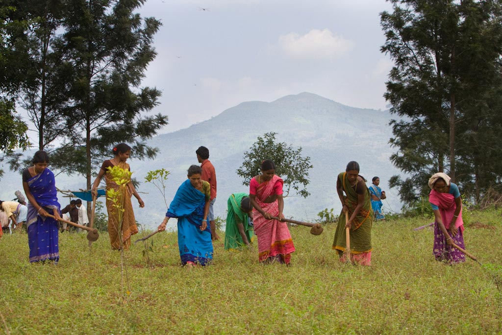 From marginalization to premium coffee marketing: the inspiring story of Araku people in India
