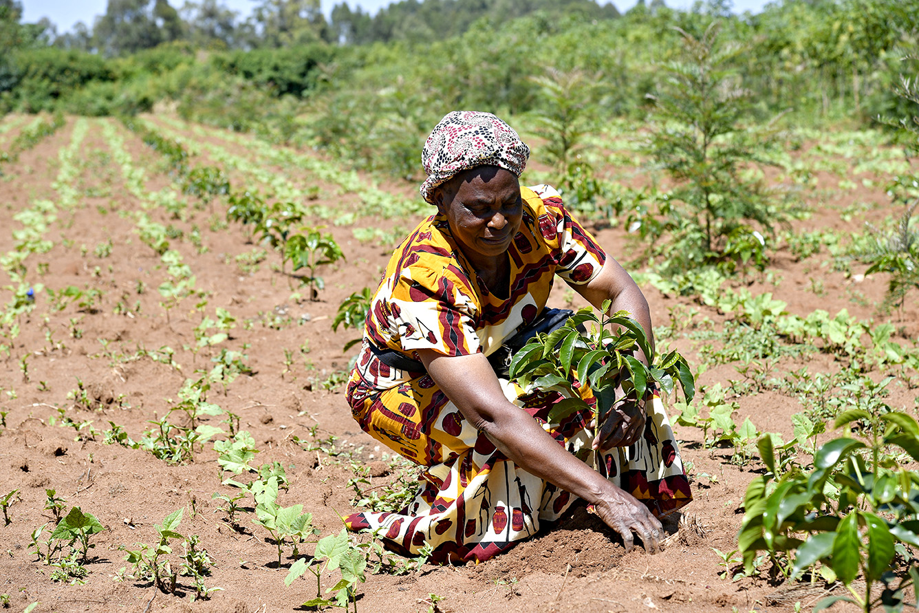 Impact measurement: the link between farming practices and productivity, water, soil & carbon