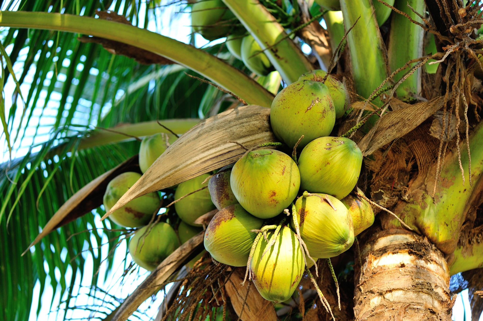 Interview: How can private companies contribute to improve Filipino coconut farmers' revenues while making their business more resilient?