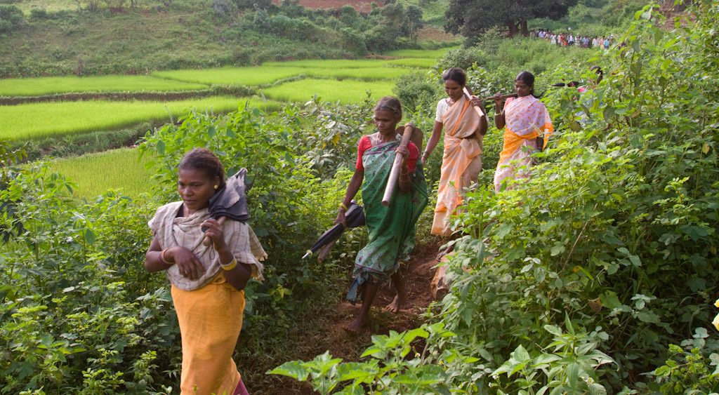 The fruits of hope- The Livelihoods- Araku #2 project in India