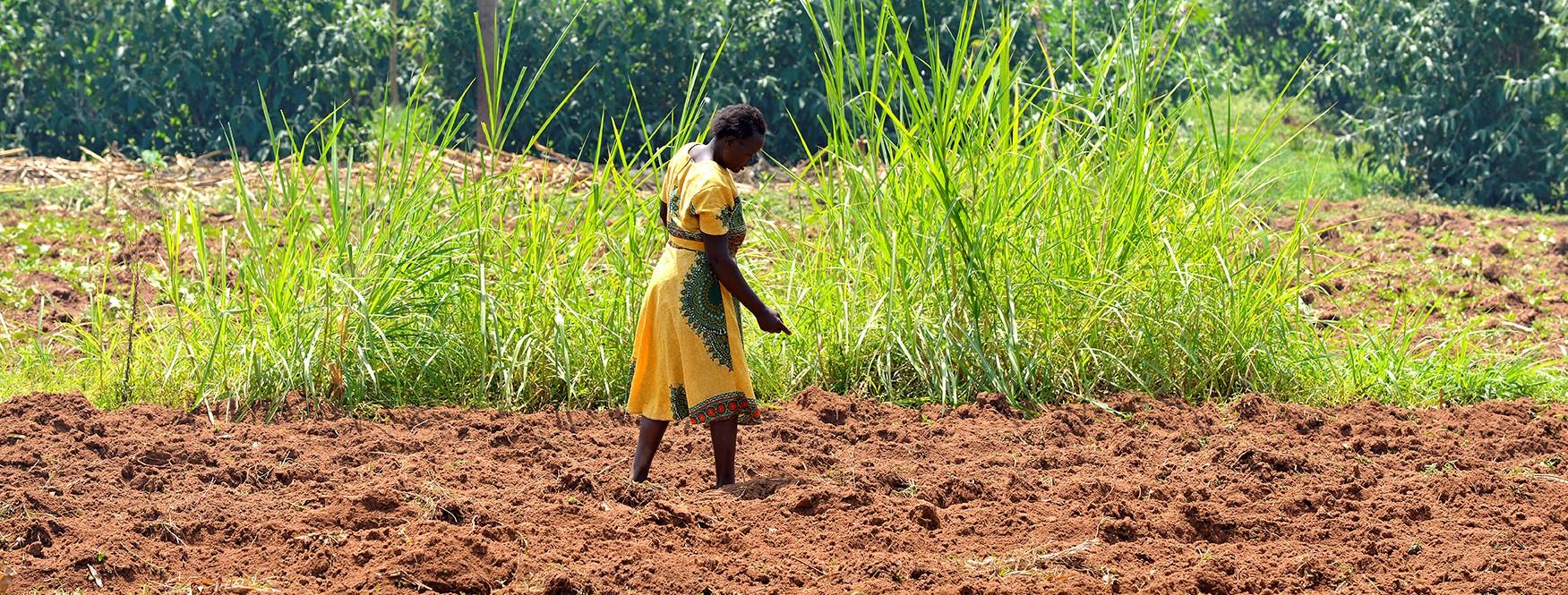 Livelihoods Venture at COP14:<br> 4 questions to Bernard Giraud on land restoration