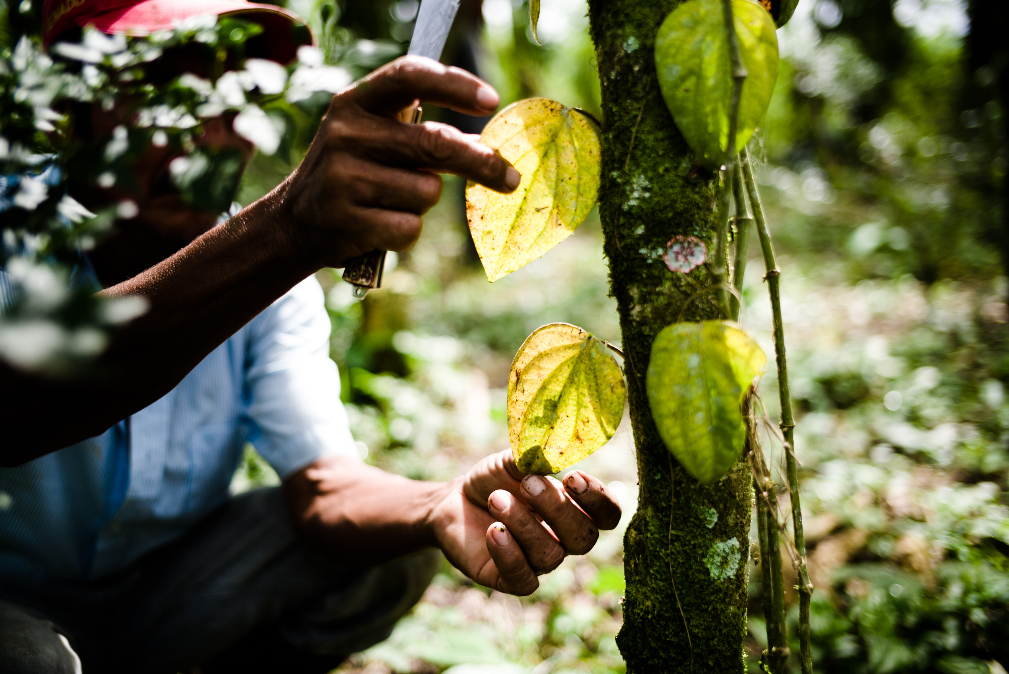 One Planet Business for Biodiversity (OP2B): <br> UNIS POUR PRESERVER LA BIODIVERSITE