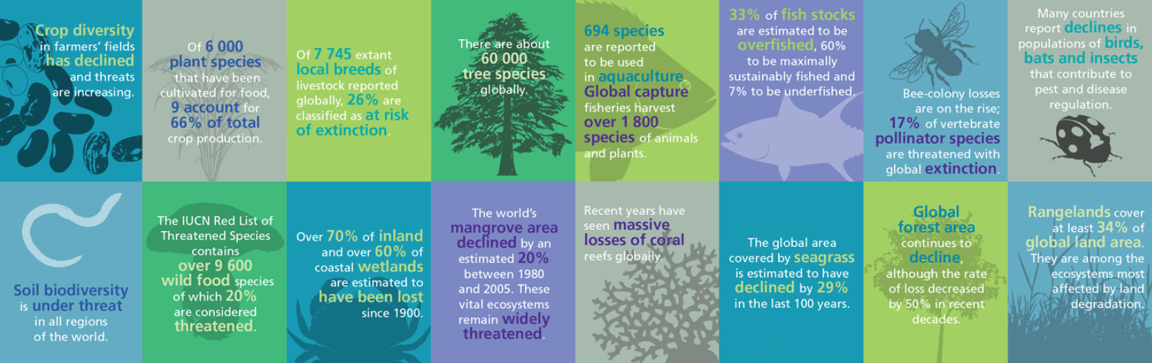 Key figures on biodiversity loss from FAO