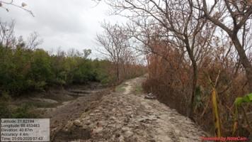 Amphan cyclone mangroves embankments bio-shield