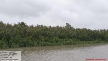 Intact mangroves Amphan cyclone