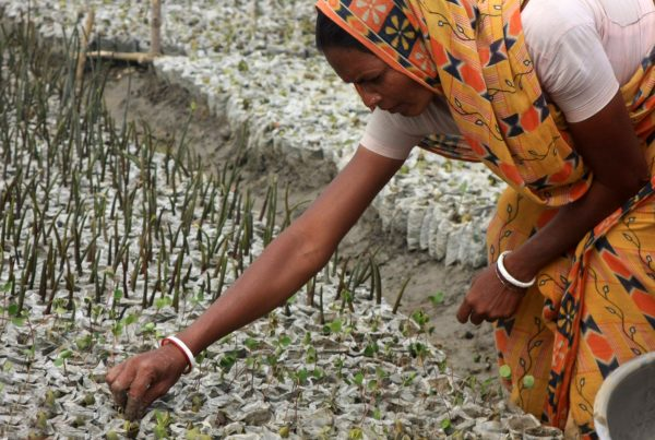 Sundarbans, NEWS, mangroves, women, coastal communities